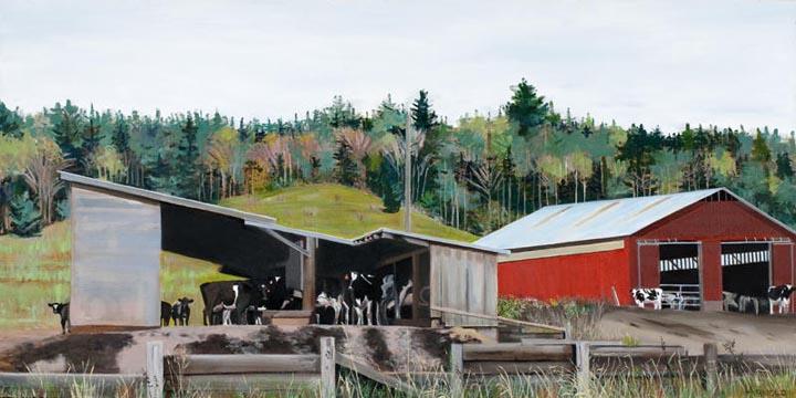 Cows Gazing