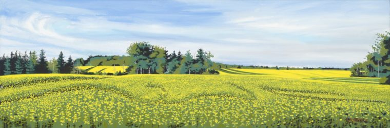 Mustard Field PEI, 12x36