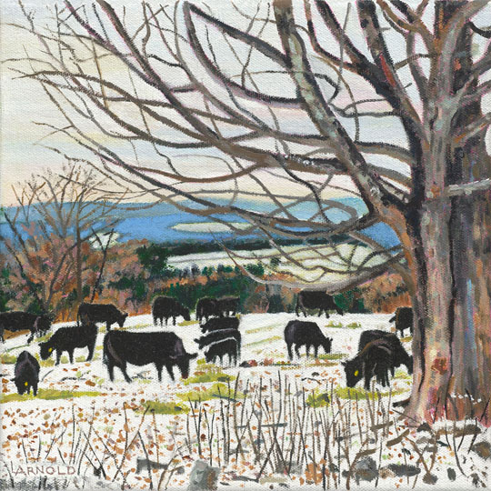 Cows Grazing On Barr Hill, Winter